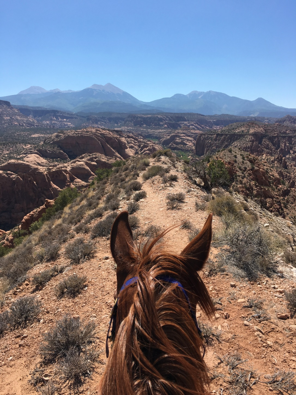 Endurance Riding Moab Utah